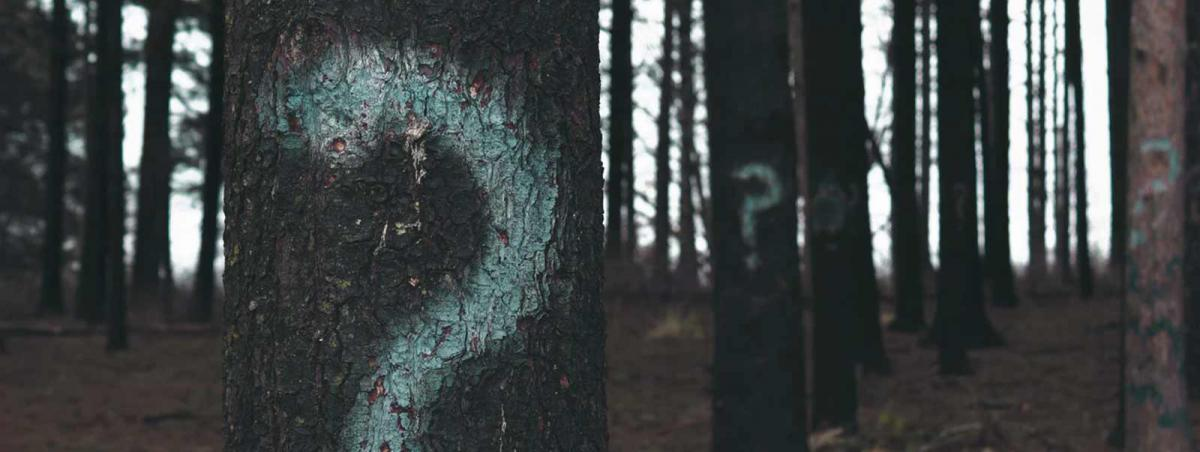 question marks painted on trees